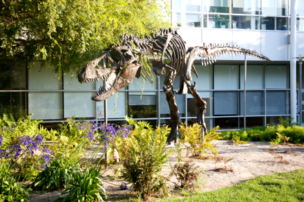 This Guy Lives at Google's Mountain View, CA Campus